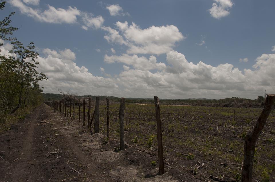 La reserva de lado derecho. Al fondo la finca, donde se visualiza la construcción de la nueva carretera.